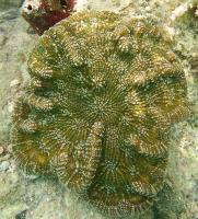 cactus-coral