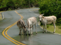 donkeys-road-drink