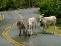 donkeys-road-drink